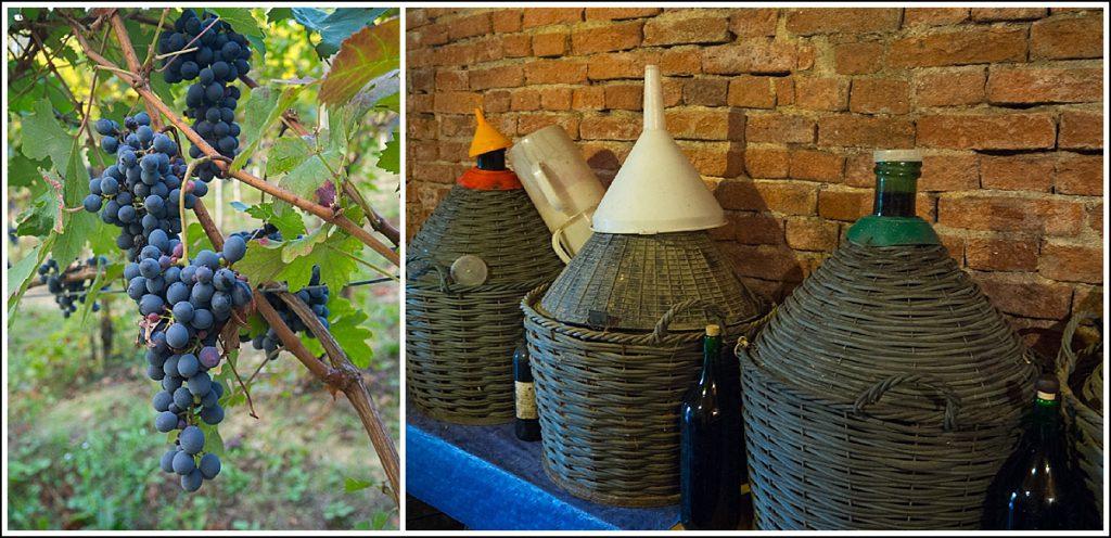 Vinsmaking i Piemonte