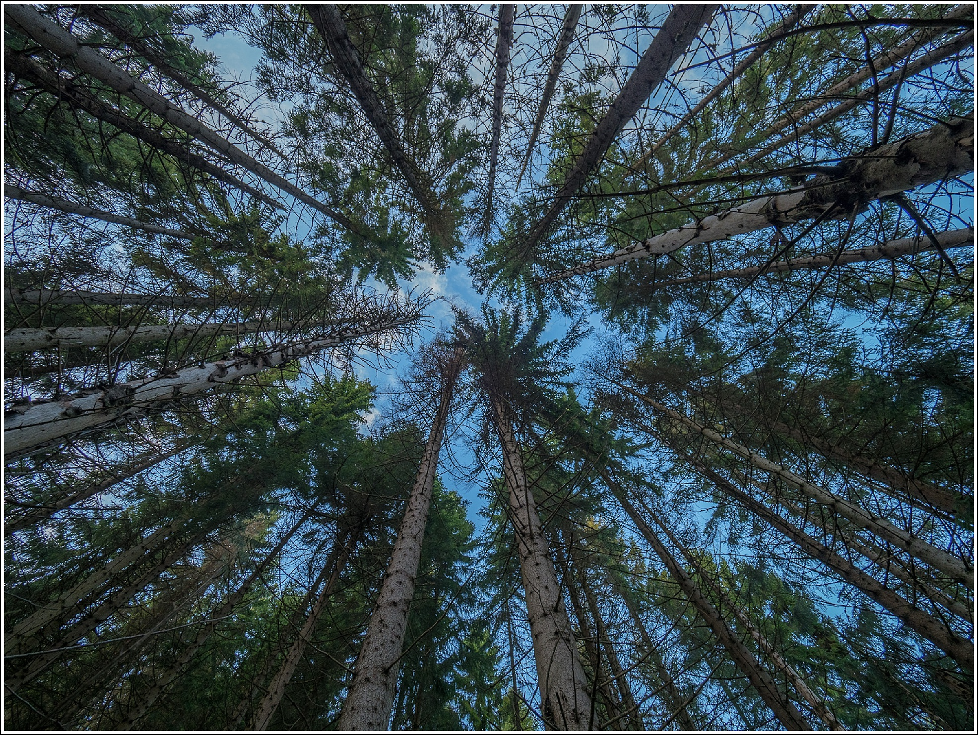 Vill skog i vestmarka